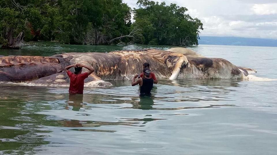 В Індонезії наберег викинуло невідому гігантську істоту,— ВІДЕО