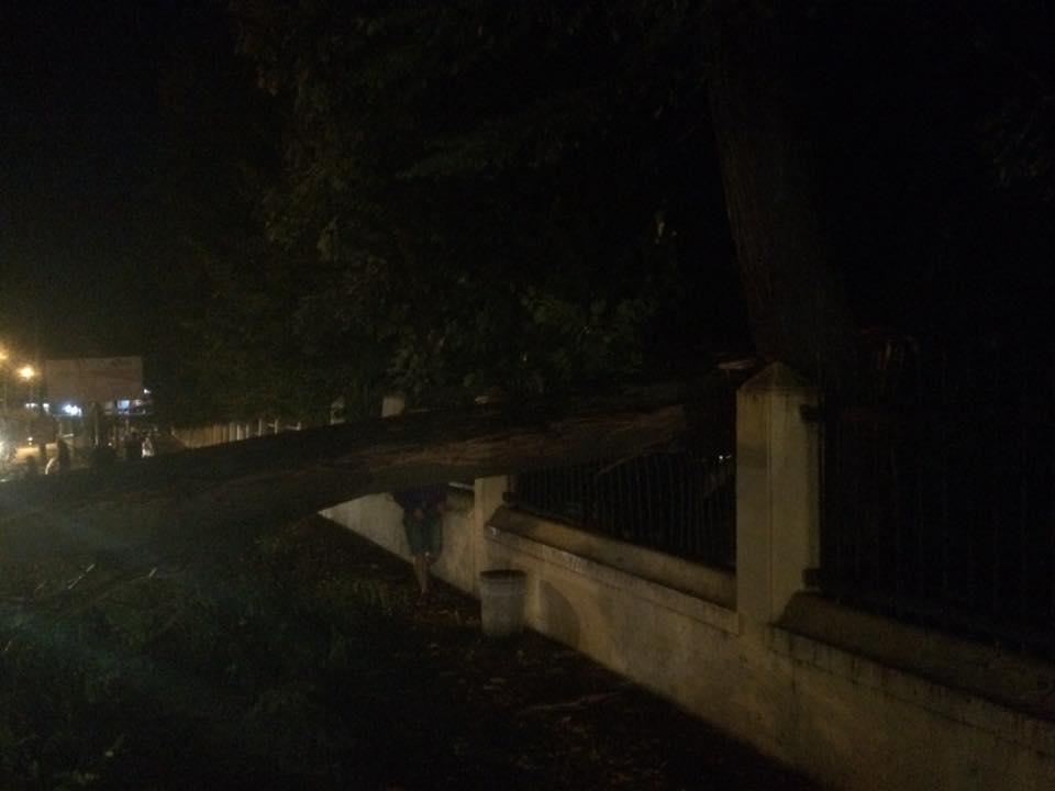 Апокалиптический циклон вЧерновцах: поломаны сотни деревьев иповреждены авто