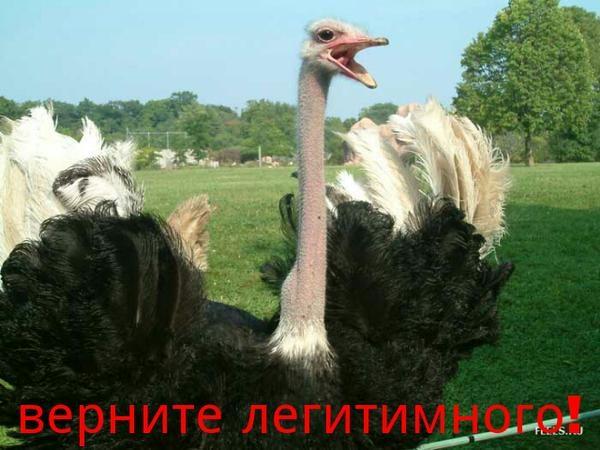 Украинские прокуроры хотят допросить Януковича в Межигорье возле страусов - Цензор.НЕТ 8427