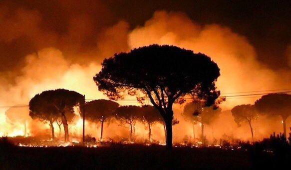 Пожежі в Іспанії: евакуйовано понад 1000 осіб, вогонь добрався донаціонального заповідника