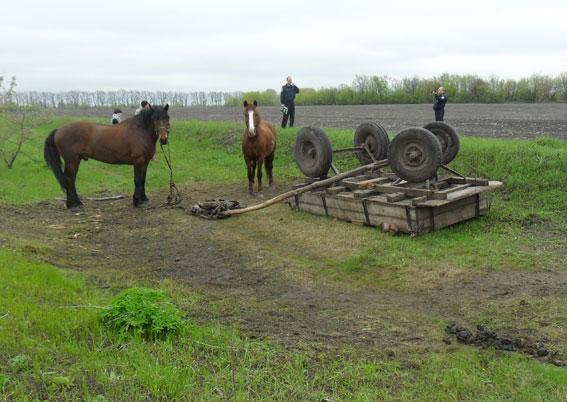 Осторожно, кони убивают!