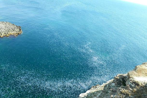 ВКрыму полчища медуз «оккупировали» акваторию мыса Тарханкут