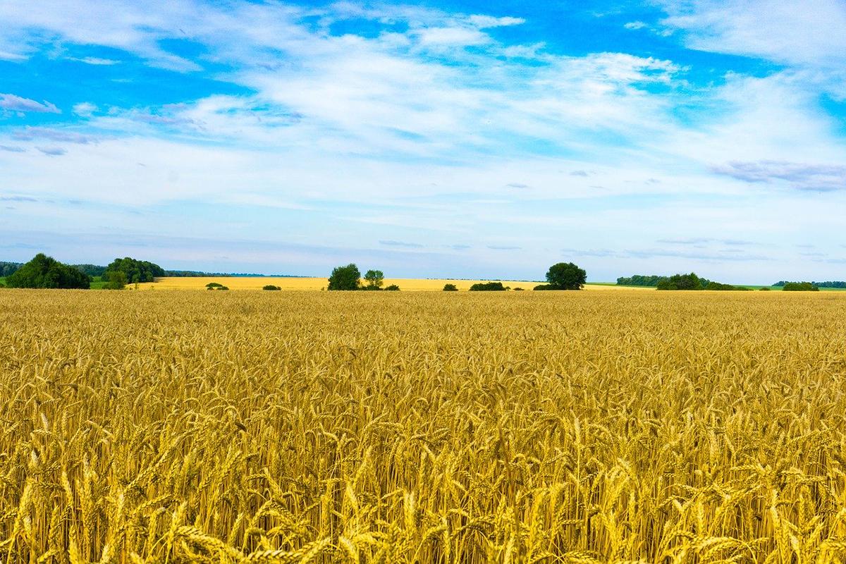 Зеленський дарма поспішає з відкриттям ринку землі в Україні