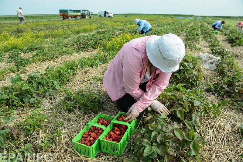 В каких странах хотят работать украинцы, и почему они оттуда не возвращаются