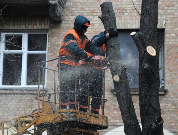 Каждый украинец может самостоятельно остановить незаконную обрезку деревьев