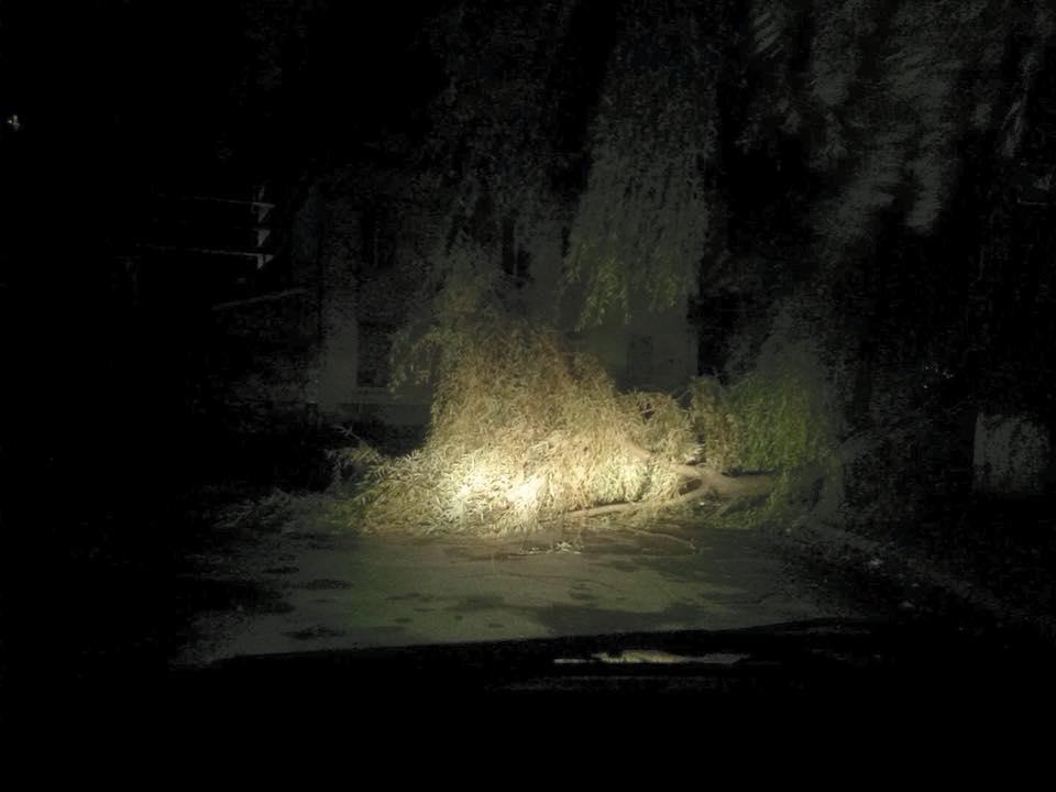 Потужний буревій уЛьвові повалив дерева тазривав дахи: подробиці
