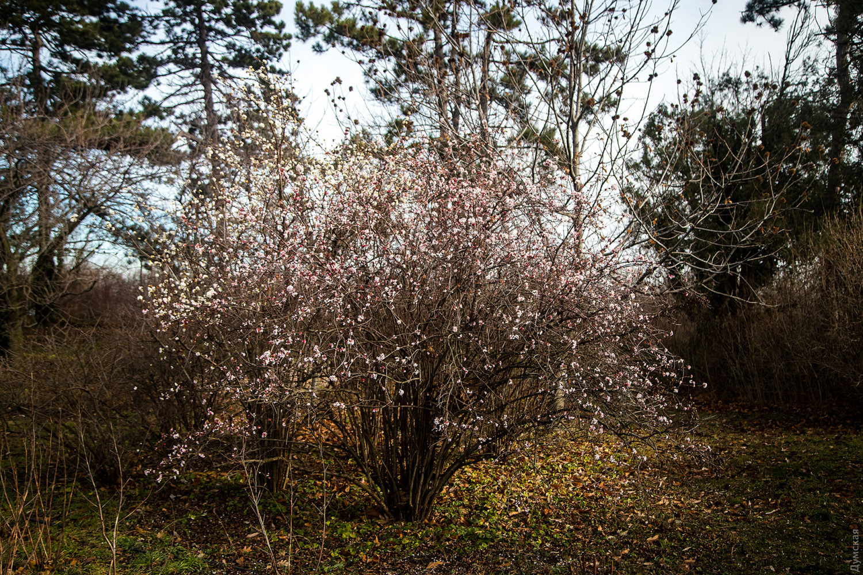 В Одесі через аномального тепла зацвів сад: опубліковані барвисті фото