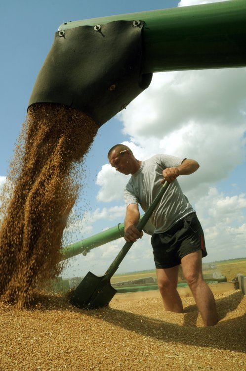 Сельхозпроизводители увеличили объемы производства