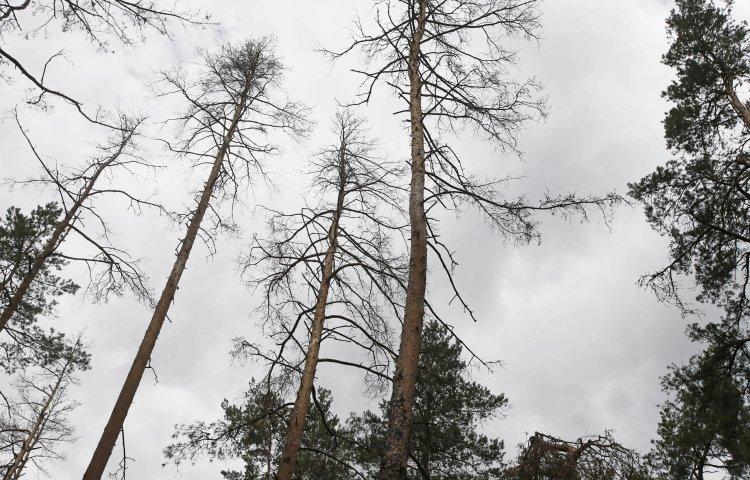 Сергей Курикин рассказал, как бороться с проблемой массового усыхания лесов