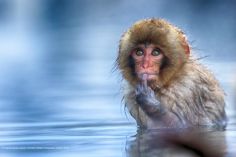этом красивой картинки про животных до слез просто хотите заиметь