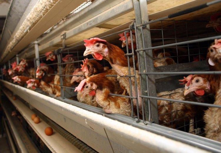 «Мироновский хлебопродукт» привлек кредит у ЕИБ на сумму 85 млн евро