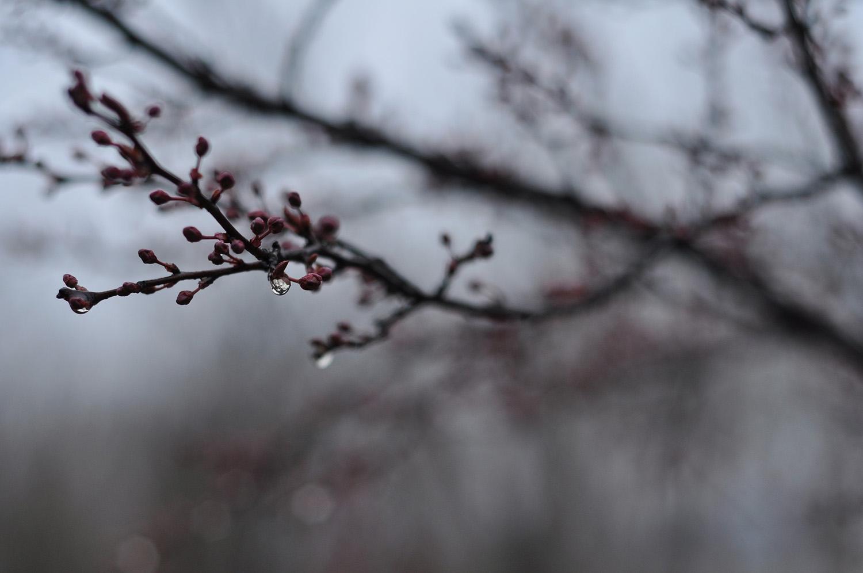 Прогноз погоды в Украине на 12-17 марта