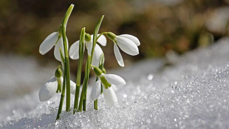 Синоптики дали прогноз погоды на весну