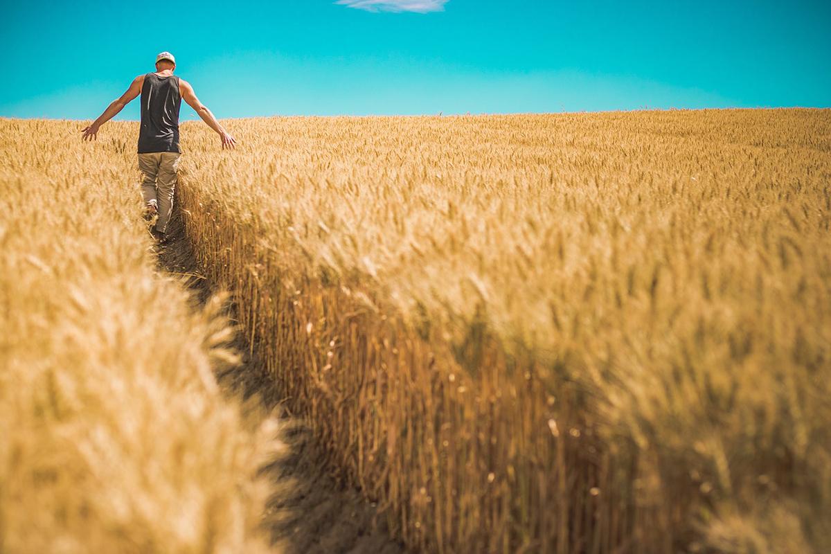 Почему нельзя спешить с запуском продажи рынка земли