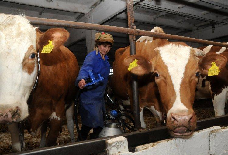 Налоговики хотят увеличить нагрузку для производителей мяса