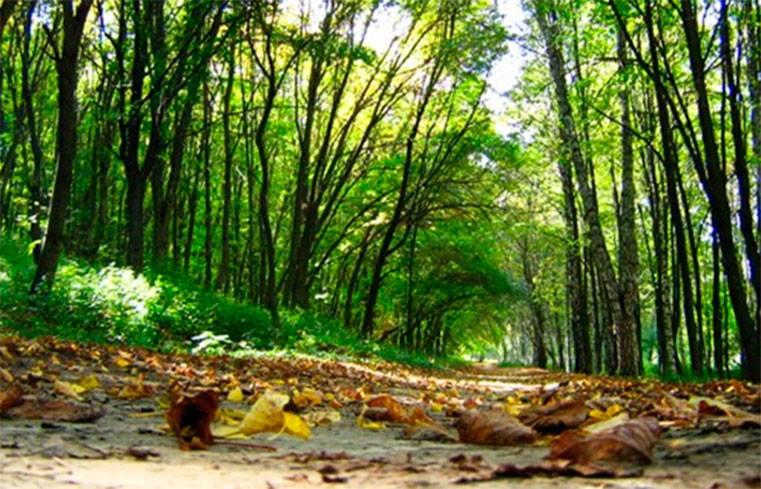 В Украине выбирают нового главу Госагентства лесных ресурсов
