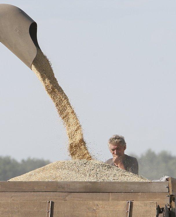 Негласные ограничения на экспорт пшеницы из РФ привели к росту мировых цен