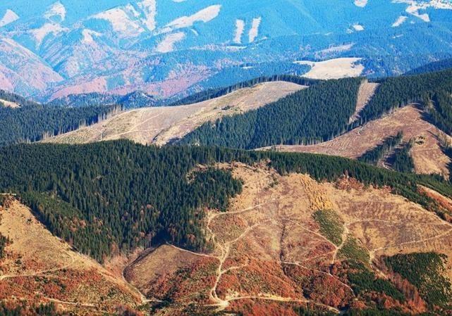 Володимир Борейко про відповідальність за вирубку лісів