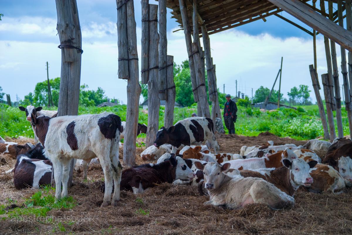 Производство молока в нашей стране может сократиться, а конкуренция между компаниями вырасти