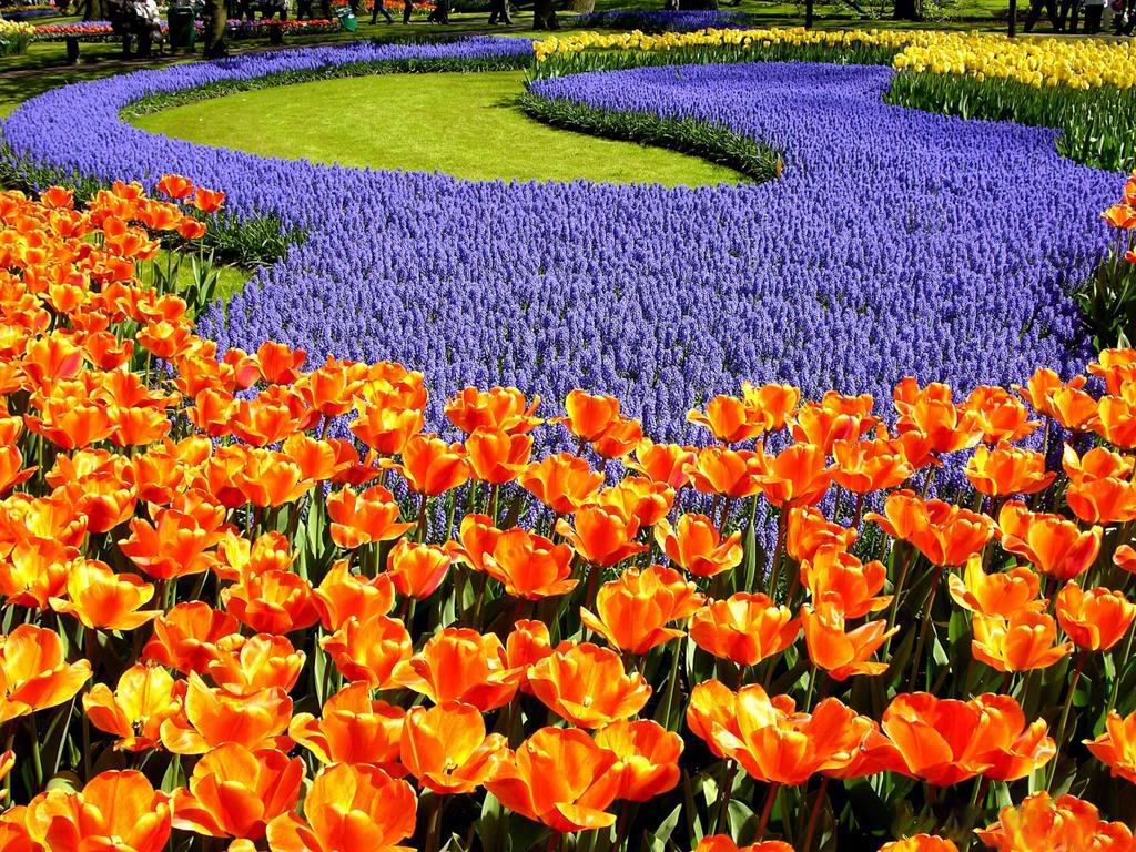 Цветы мира официальный сайт, цветы