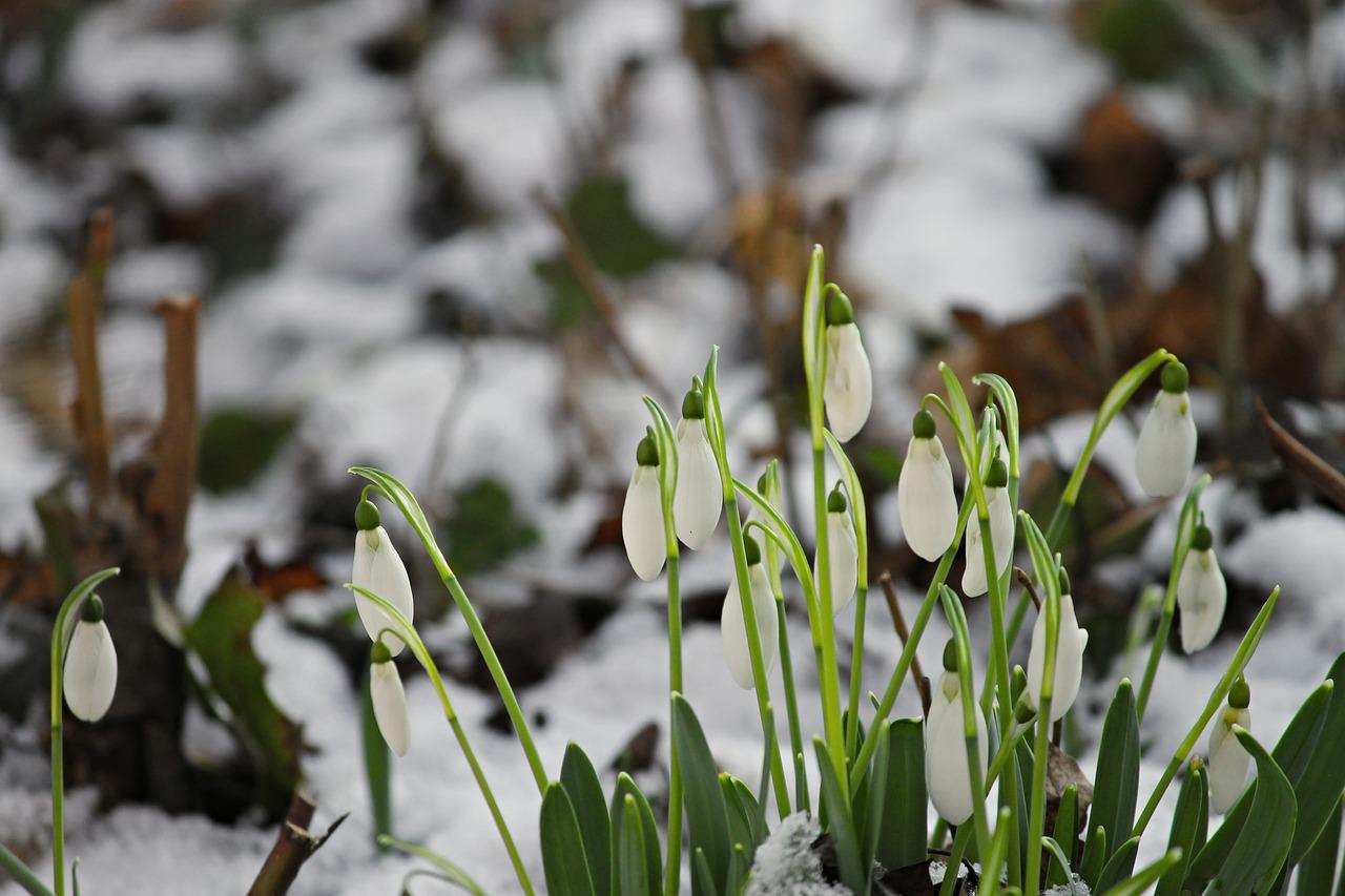 В марте в Украине может быть холодно