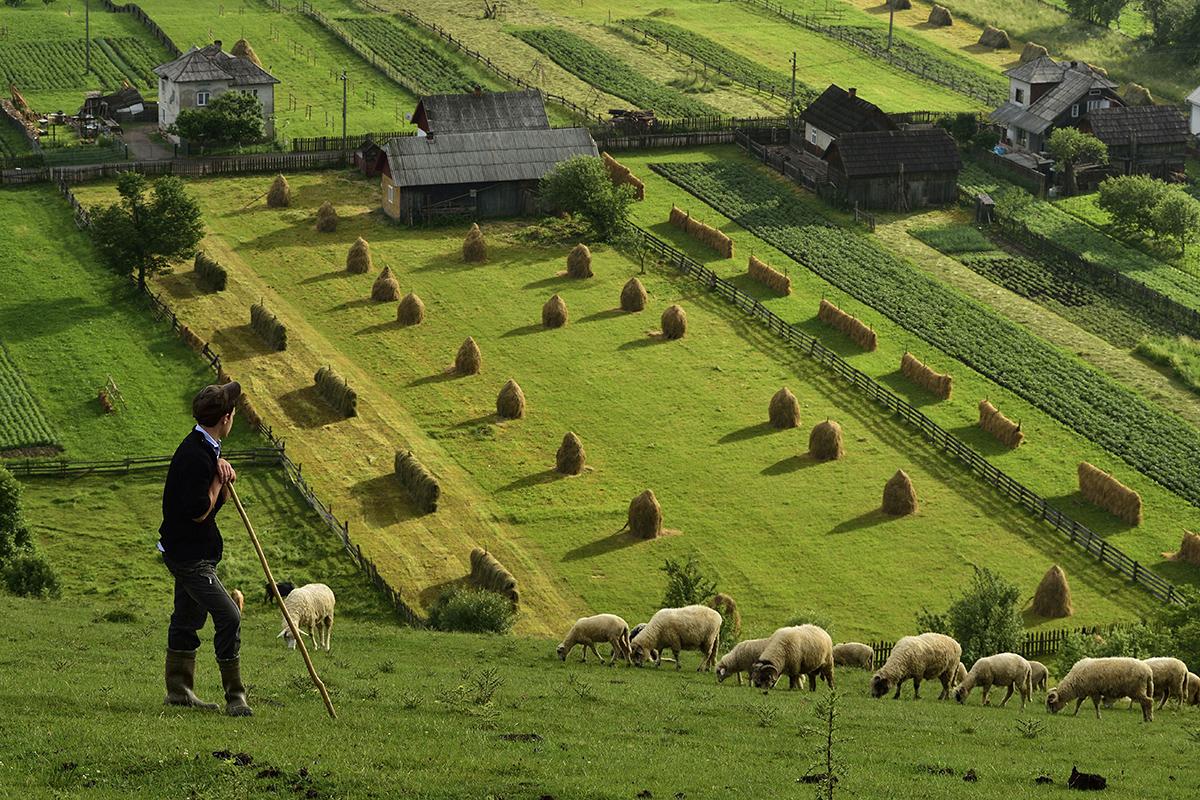 Полезный и не очень опыт открытия рынка земли в соседних странах